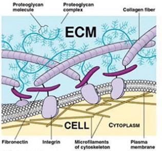 Ecm összekapcsolás